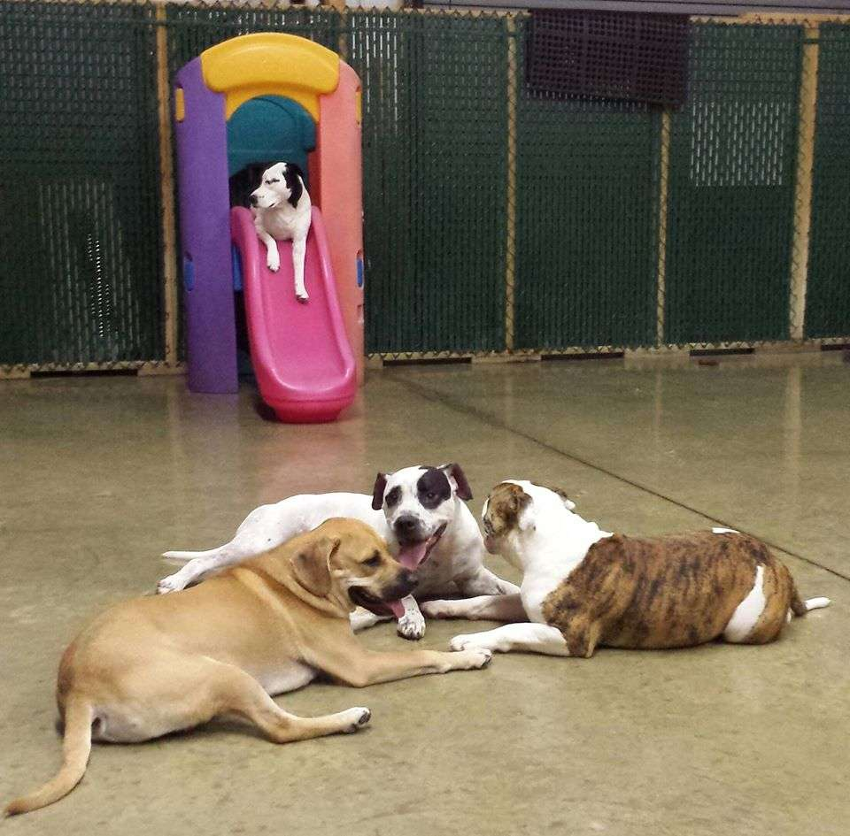 dogs socializing at dog dayz daycare