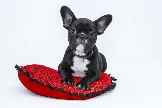 sanderson dog dayz attendee