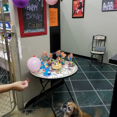 dog birthday celebration
