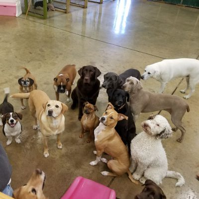 dog dayz daycare in wilmington