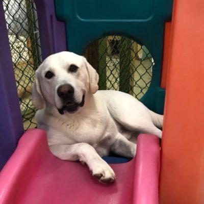 dog playing on slide