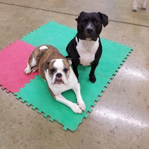 two dogs socializing at dog dayz daycare
