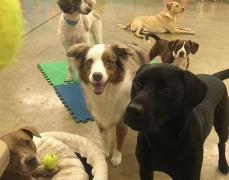 dog daycare in wilmington