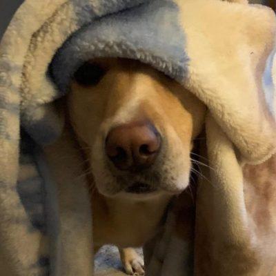 sanderson dog daycare testimonial photo 2