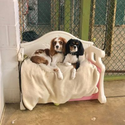 two dogs cuddling at daycare in delaware