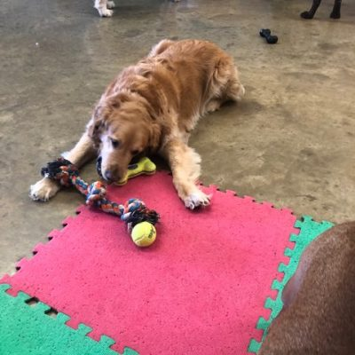 wilmingon dog daycare and pet sitting